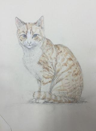 レザークラフト フィギャアカービング猫の下絵