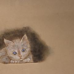 TYさんの子猫