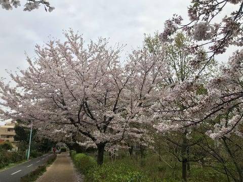 桜並木 レザークラフト教室 革工芸教室